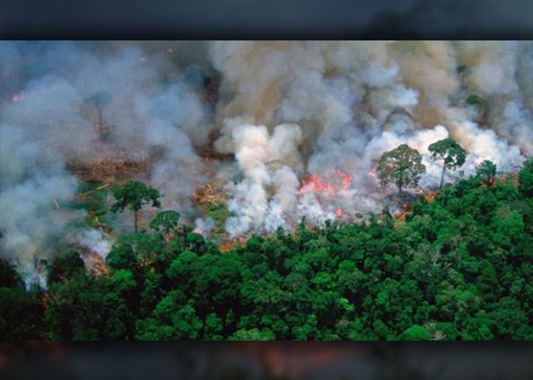 रेनफॉरेस्ट, PHOTOS: अमेजन में लगी ये आग न थमी तो सबसे बड़ा रेनफॉरेस्ट बन जाएगा 'घास का मैदान'