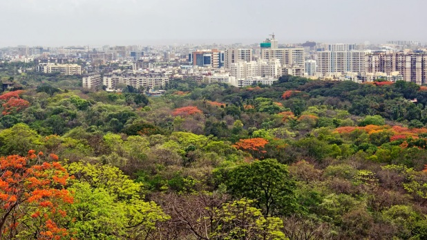 Aarey, Aarey issue, Aarey forest, Aarey Mumbai, Bombay High Court, Mumbai News, Mumbai Pollution, Aarey Tree Cutting