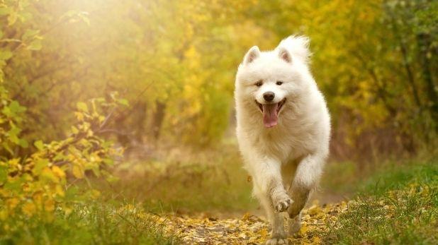 nagaland government ban dog meat, नागालैंड में Dog Meat पर बैन, सोशल मीडिया पर मचे बवाल के बाद सरकार ने लिया फैसला