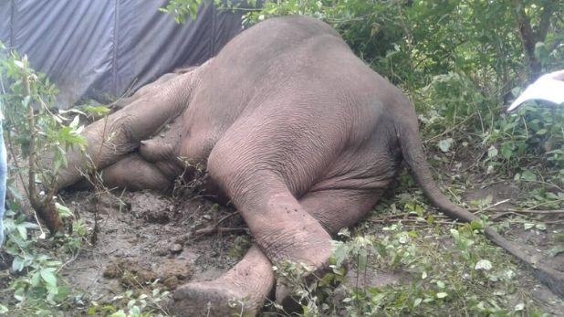elephant dead in Betla national park, झारखंड के बेतला नेशनल पार्क में मिला हाथी का शव, मौत के कारणों का नहीं चला पता