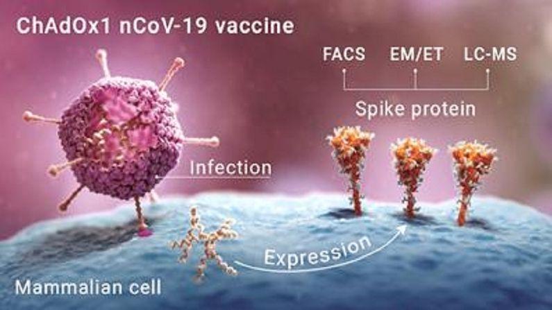 Coronavirus Spike Protein (1)