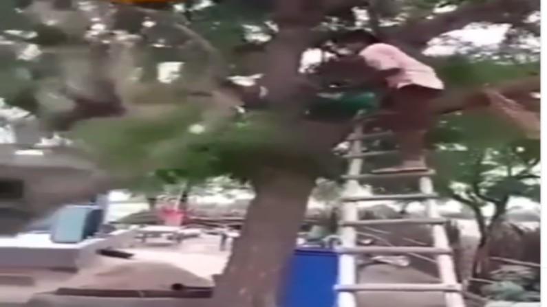 tree funny video